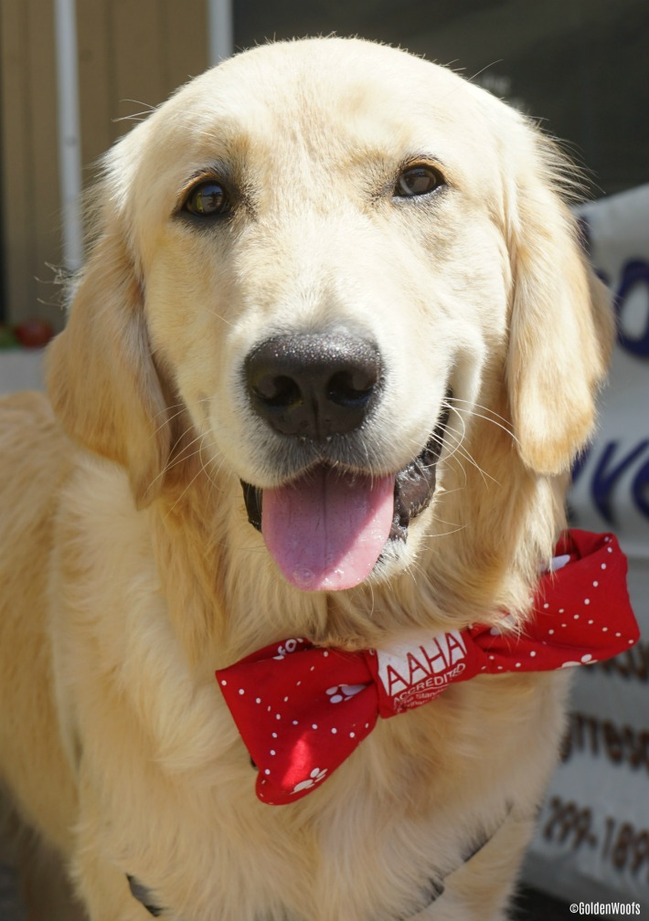 Happy Dog AAHA accredited vet