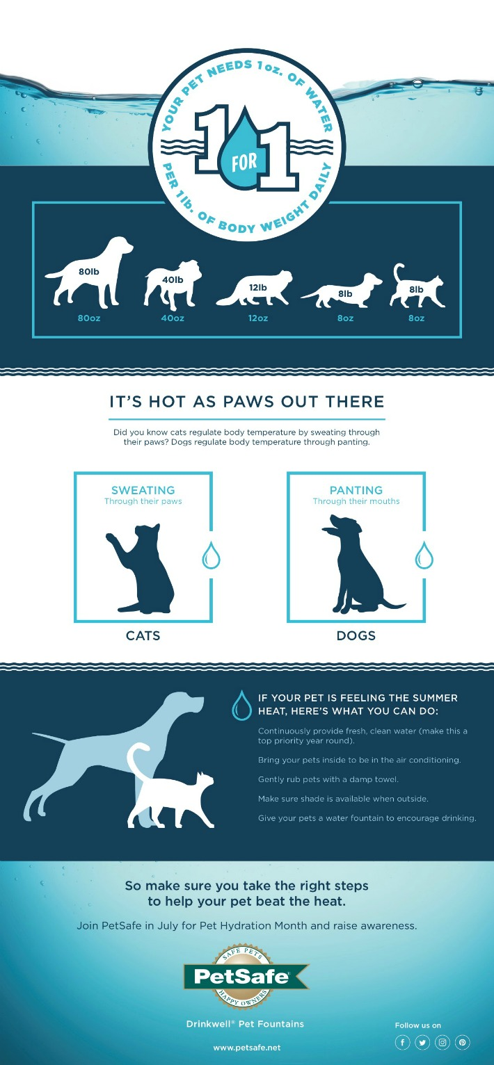 Infographic How much water does a dog need