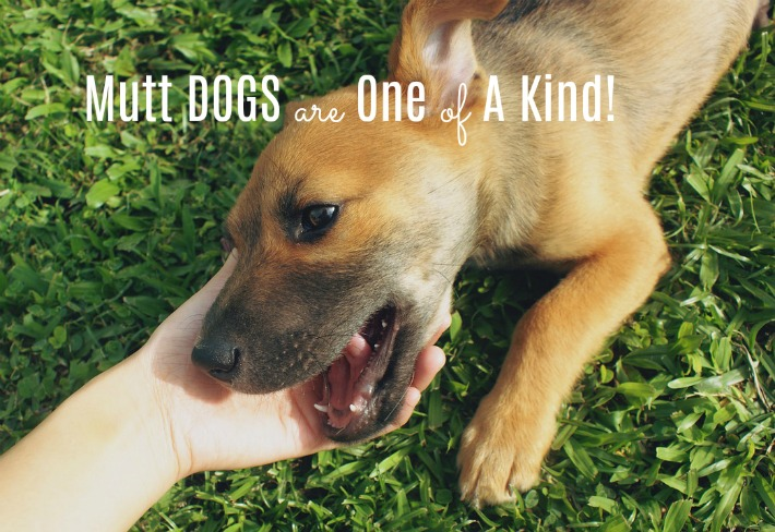 Mutt dogs are one of a kind!