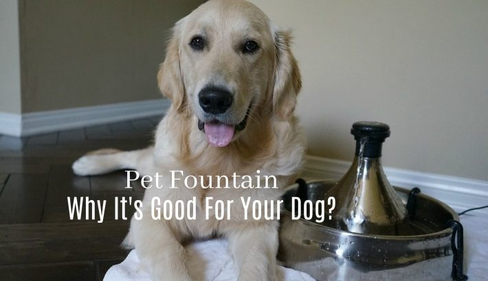 Pet Fountain | Why It's Good For Your Dog?