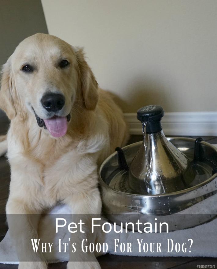 Pet Fountain PetSafe Drinkwell
