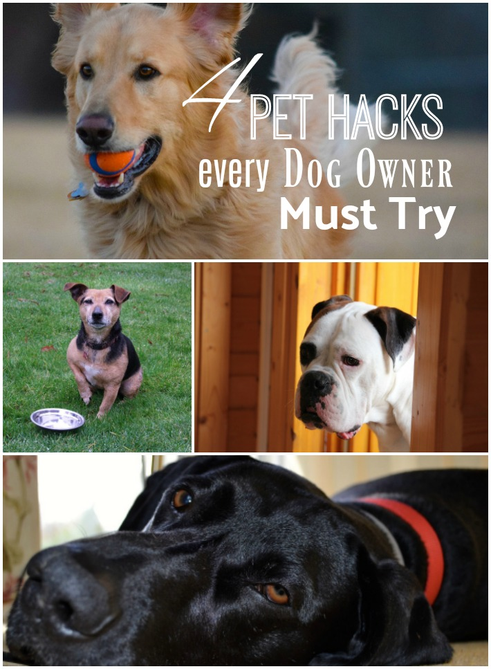 Four pet hacks every dog owner must try