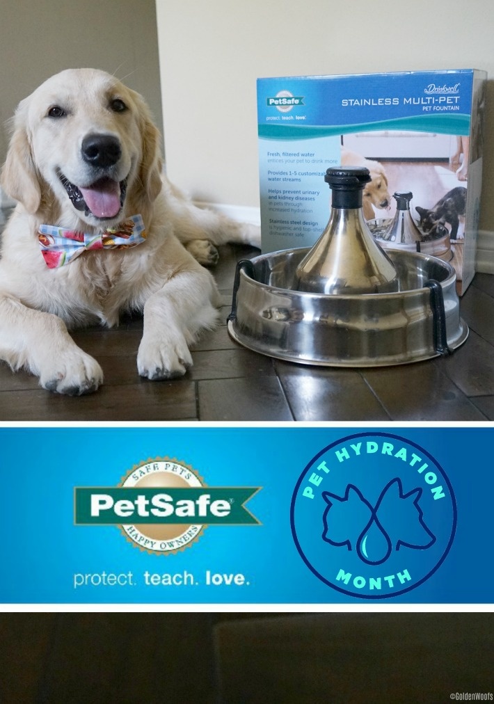 Pet Hydration Month Pet Safe Drinkwell