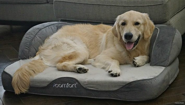 Sunday A Day To Sleep In | #SertaPets iComfort Sleeper Sofa Pet Bed