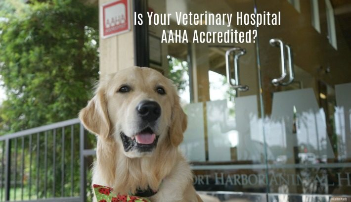 Is Your Veterinary Hospital AAHA Accredited?