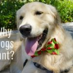 5 Reasons Why Dogs Pant