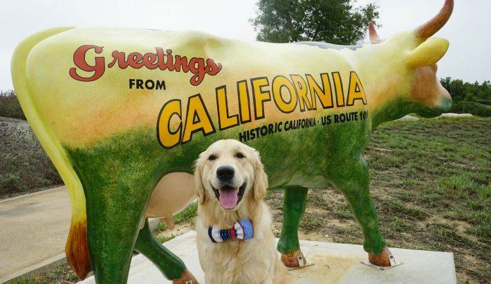 Greetings from California
