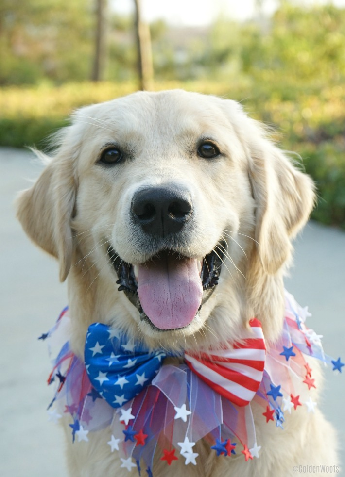 cutest patriotic puppy