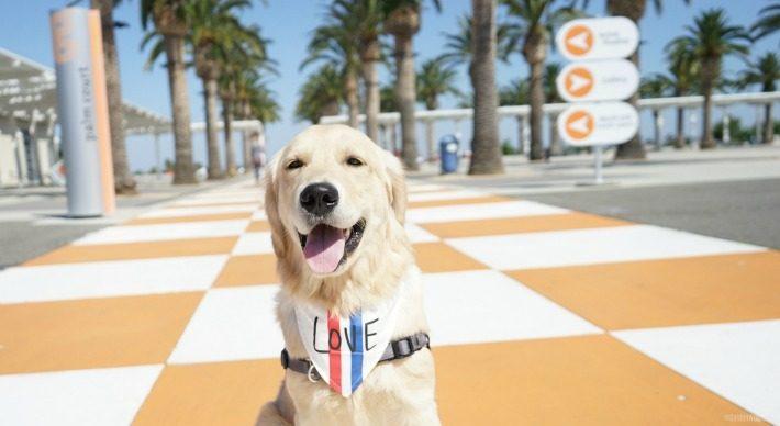 Sunday Funday at Dog Friendly Great Park