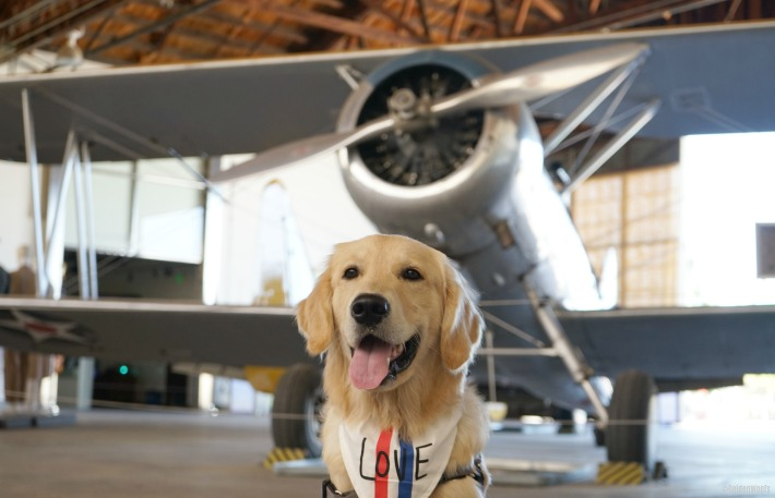 dog friendly great park military aircraft