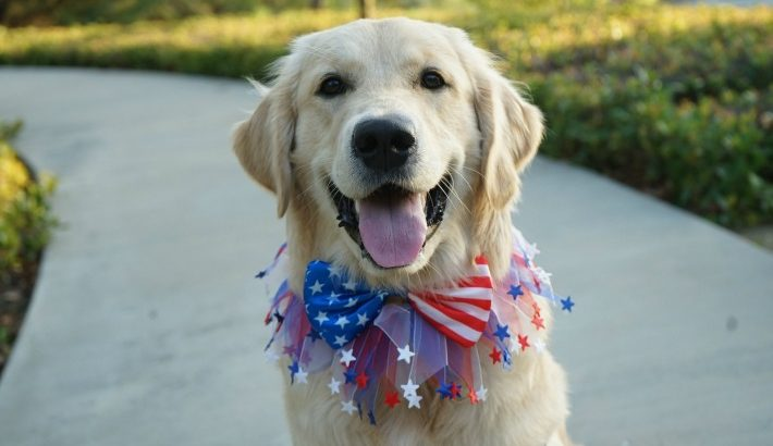 Patriotic Puppy | Happy Fourth of July