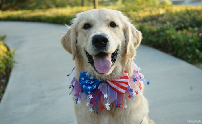 patriotic puppy happy fourth of july golden woofs