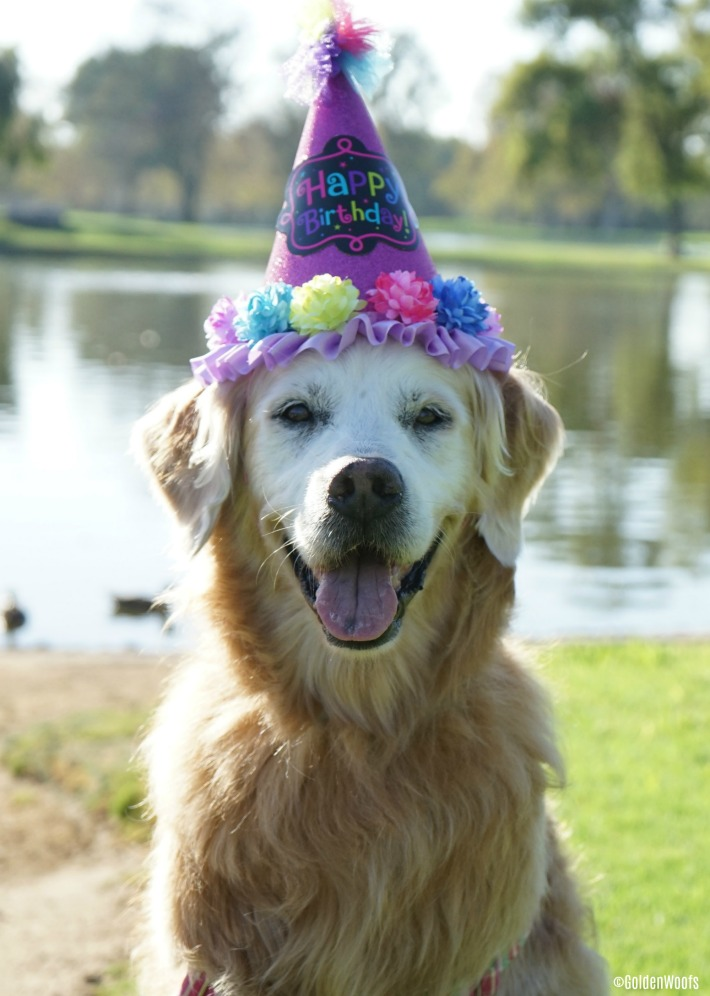 16th dog birthday