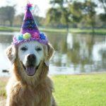 Happy 16th Barkday Angel SUGAR