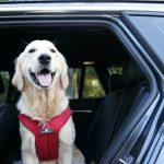 Car Travel With Your Dog #AutotraderDogDay