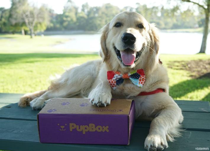 CelebriPuppy Pupbox KORU BEAR