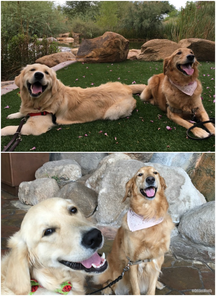 Golden Pals Meet up with Giselle