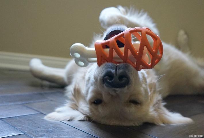 interactive dog treat toy Hol-ee Gourmet Turkey Leg