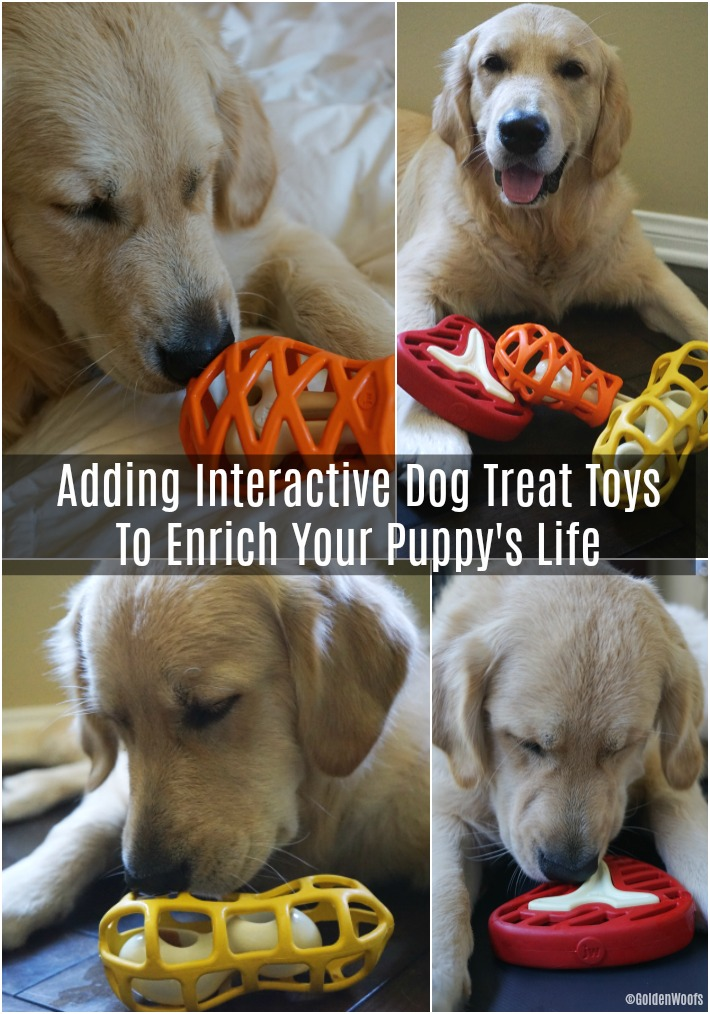 Interactive dog treat toys Petmate Hol-ee Gourmet