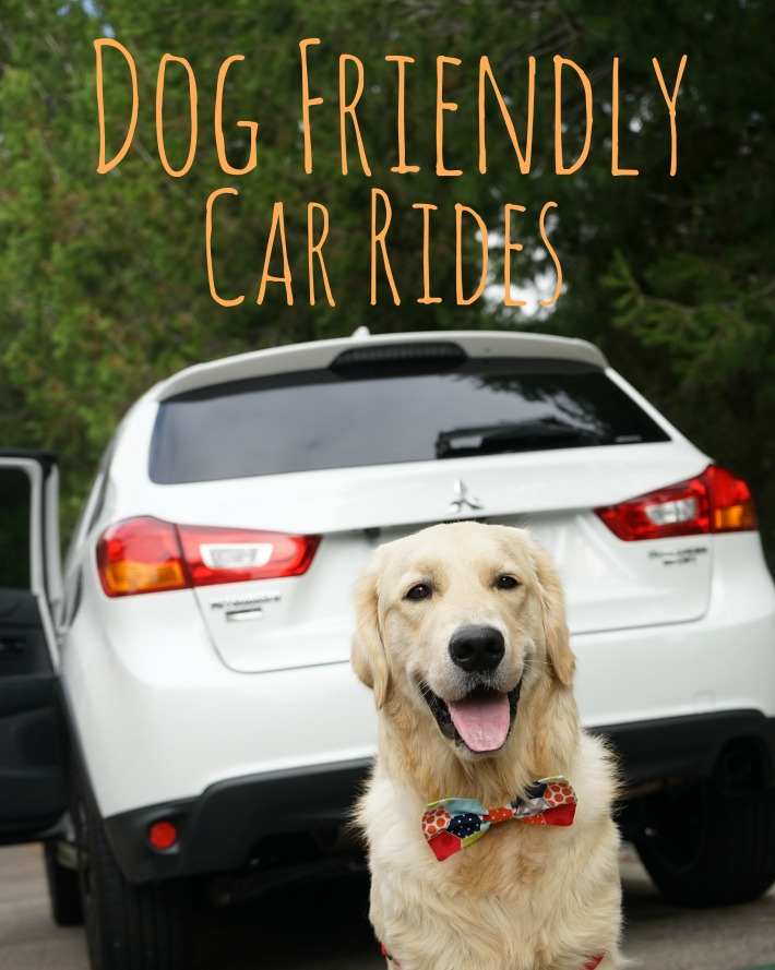 Koru Bear Golden Retriever Dog friendly car rides