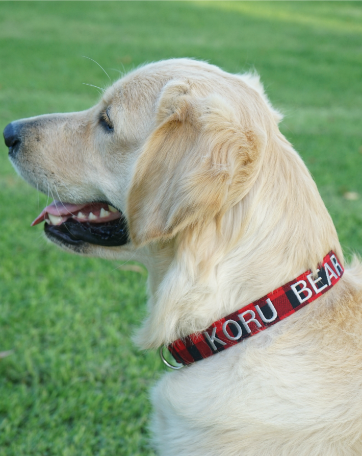 Personalized Dog Collar Dog Collar World