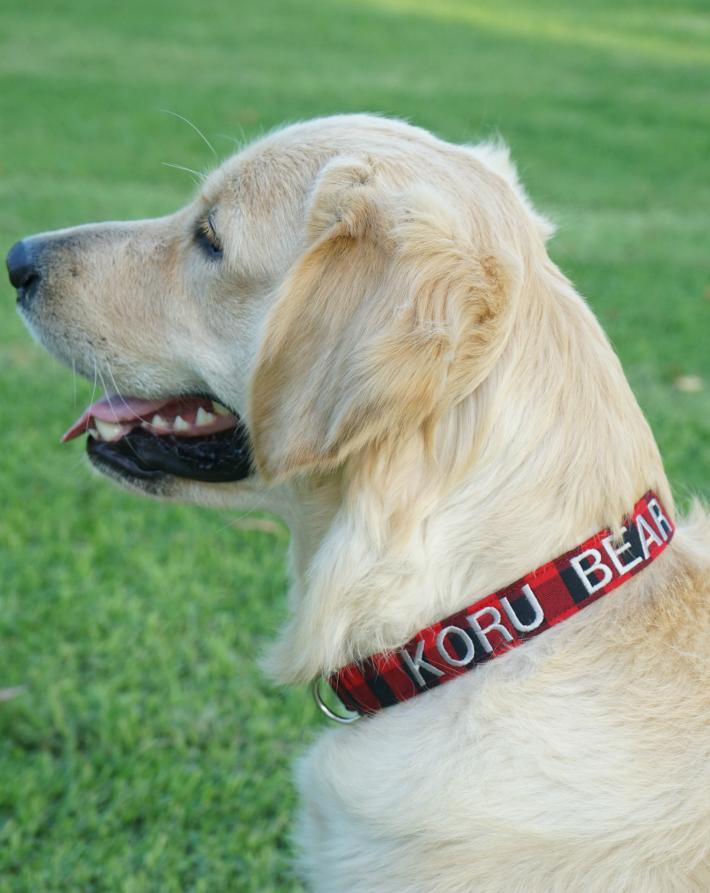 Personalized Dog Collar Dog Collar World