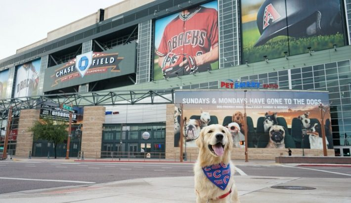 KORU BEAR at Dog Friendly Chase Field PetSmart Patio