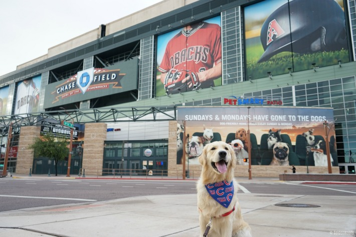 dog friendly baseball game Chase Field PetSmart Patio