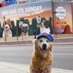 Flashback Sunday: Angel SUGAR Every Dog Has Its Sunday