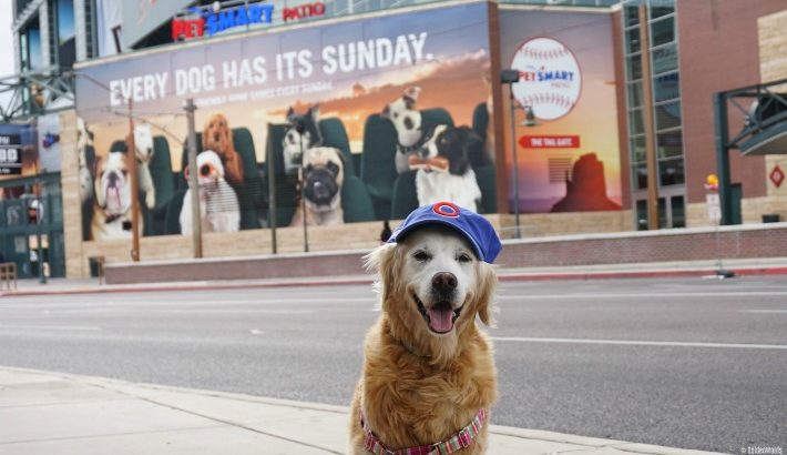Flashback Sunday: Angel SUGAR Every Dog Has Its Sunday