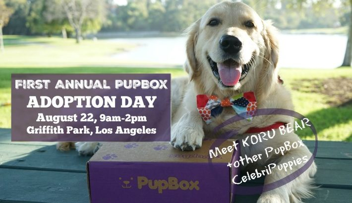 Meet CelebriPuppy KORU BEAR at PupBox Adoption Event