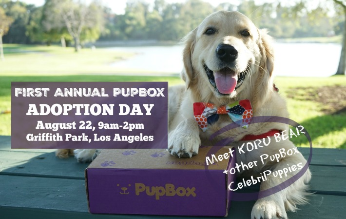 Dog Adoption Day Ri