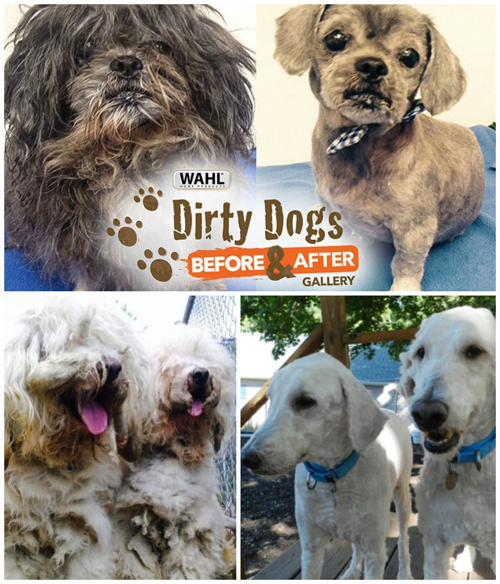 Shelter Dog Makeovers - Wahl's Dirty Dogs