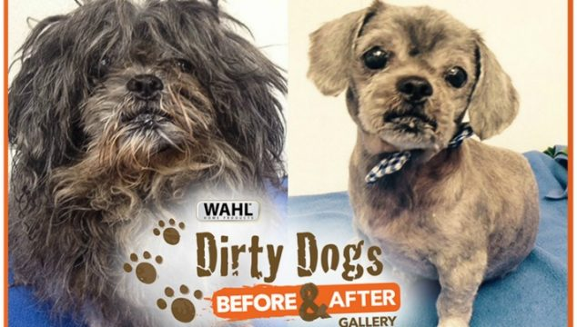 Wahl's Amazing 10 Shelter Dog Makeovers in America