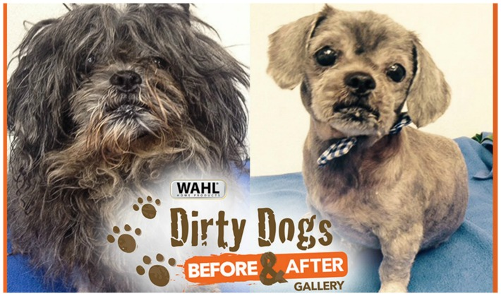 Wahl's Shelter Dog Makeovers