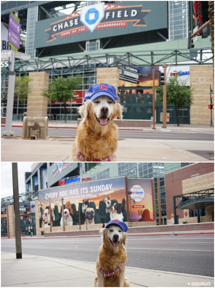 cubs dog PetSmart Patio Chase Field