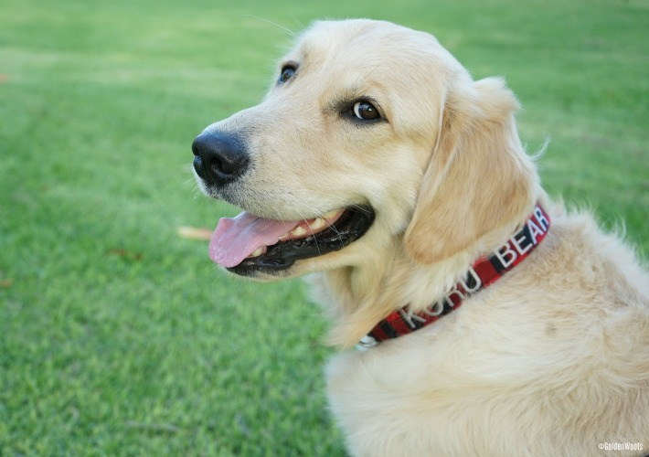 Your Dog Deserves a Personalized Dog Collar from Dog Collar World