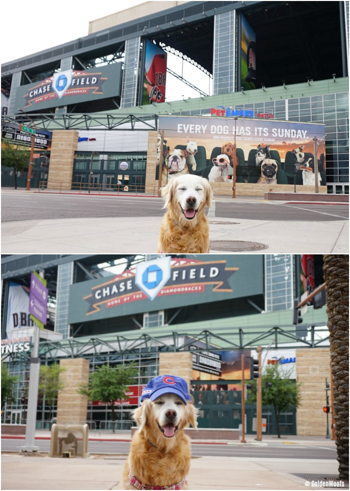 dog friendly Chase Field