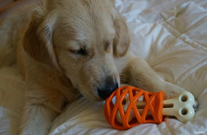 enrichment dog toy Hol-ee Gourmet Turkey Leg