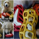 Adding Interactive Dog Treat Toys To Enrich Your Puppy's Life #jwpet #holeegourmet