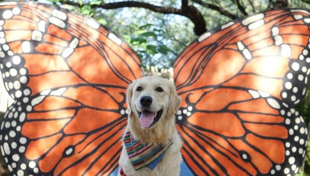 Monarch Butterfly Dog