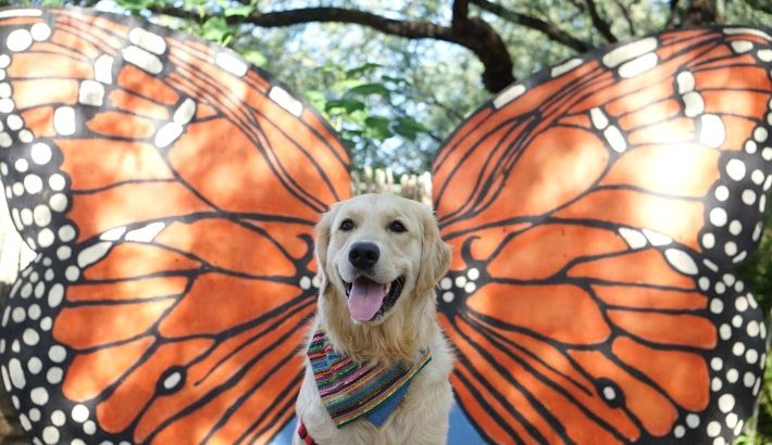 Monarch Butterfly Dog
