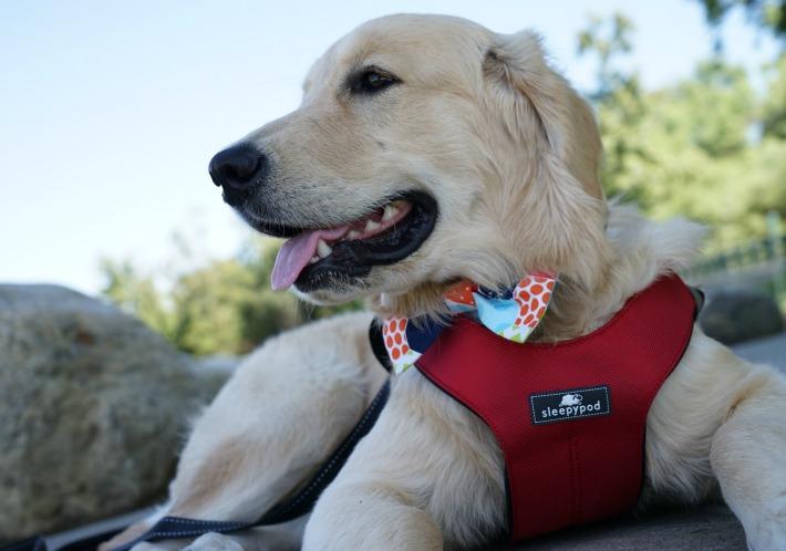 sleepypod clickit sport safety dog harness