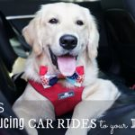 5 Tips: Introducing Car Rides to Your Dog and #BeSleepypodSafe