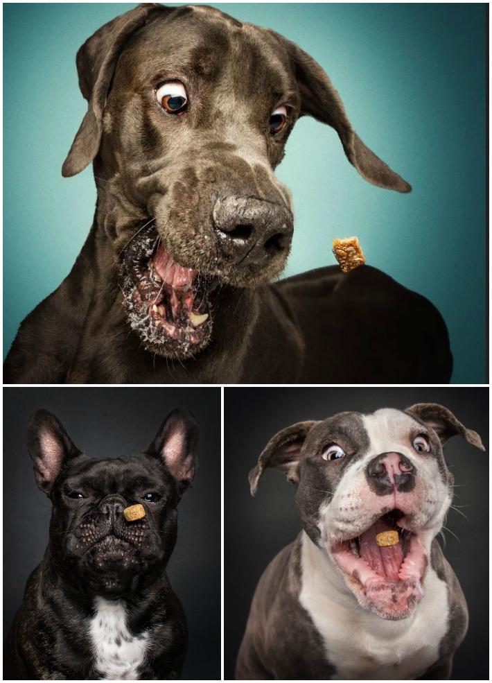 Dog Photographer Christian Vieler's Book TREAT!
