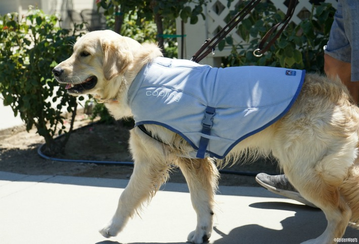Dog Cooling Vest by Kurgo | Keeps Your Dog Cool