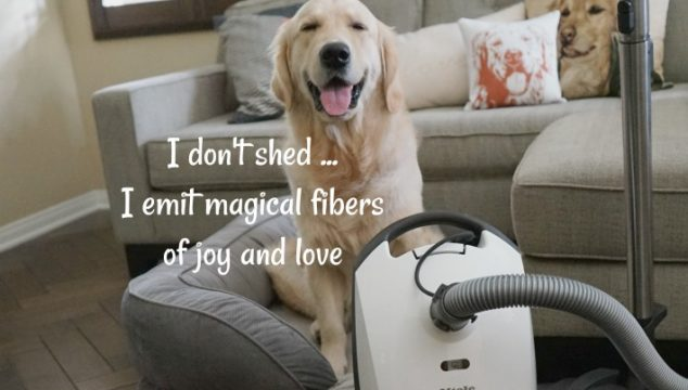 I don't shed …