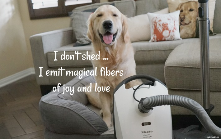 I Don T Shed Golden Woofs Sugar The Golden Retriever
