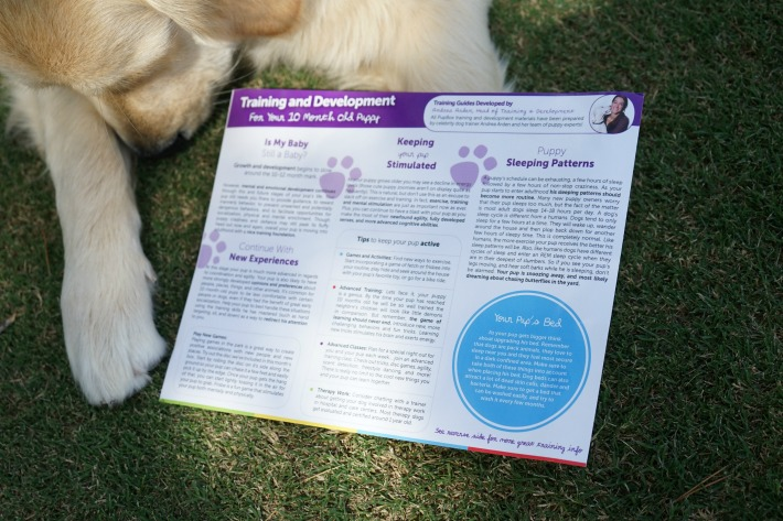 Puppy Training Guide PupBox Andrea Arden