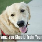 5 Reasons You Should Train Your Dog